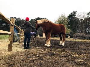 George feeding Bob hay